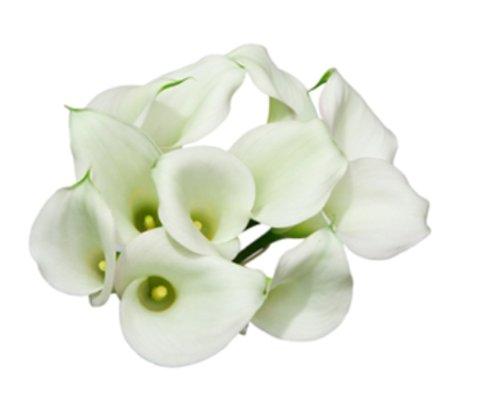 White Mini Calla Lilies 40 Stems by Mini Callas