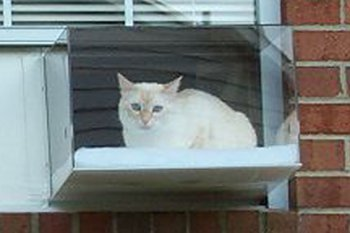 kittyview outdoor cat perch enclosure 2squarefeet crystal clear acrylic