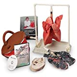 Nasco Inflatable Lung Comparison Kit and Teacher Instructional DVD - Dissection & Science Education Materials - LS03769