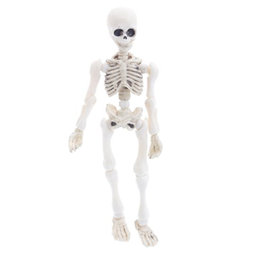 Vegan Kid Toy, Movable Mr. Bones Skeleton Human Model Skull Full Body Mini Figure Toy Halloween Children]()