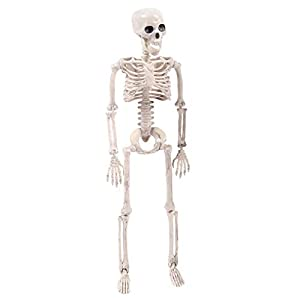 Fan-Ling Jointed Human Skeleton Decoration ,Halloween Party Prop Decoration,Halloween Skeleton,Halloween Props, Outdoor Decoration Party, Best Halloween Decoration (90cmX20cm)