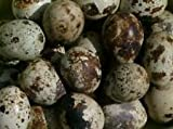 California Valley Quail Eggs $1.00 Each (Minimum of 50 per order)