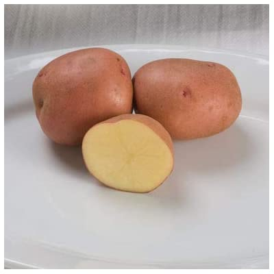 Lumos80 50 Pounds Red Gold Potato Tubers : Garden & Outdoor
