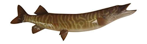 36'' Tiger Musky Half Mount Fish Replica - Low Price Guarantee - Perfect Coastal Themed Wall Decor by Mount This Fish Company