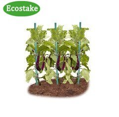 EcoStake Garden Stakes for Plants Vegetable Fence Post 6-Feet, 50 Pack, 11mm Dia, Hollow Stakes Fiberglass Stakes Tree/Cucumber/Tomato/Bean Pole Stake Rust-free