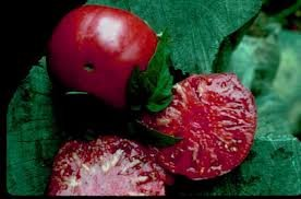 brandywine tomato seeds - 4