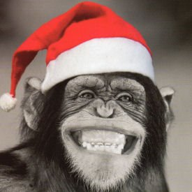 Charity Christmas Cards - Monkey In Hat - Pack Of 5 Cards ...