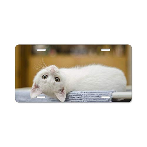 YEX Endearing Kitty License Plate with 4 Holes Novelty Car Licence Plate Covers Tag Sign