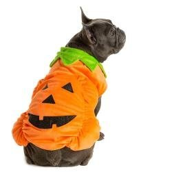 [Thrills and Chills, Pet Halloween Pumpkin Pet Costume size: Medium] (Costumes For Dogs Petsmart)