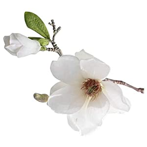 Artificial & Dried Flowers - Fashion Artificial Fake Flowers Leaf Magnolia Floral Wedding Bouquet Party Decor White - Artificial Dried Flowers Artificial Dried Flowers Flower Magnolia Orc 4