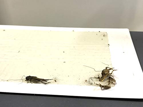 ALAZCO 12 Glue Traps - Excellent Quality Glue Boards Mouse Trap Bugs Insects Spiders Cockroaches Mice Trapper & Monitor NON-TOXIC by ALAZCO (Image #4)