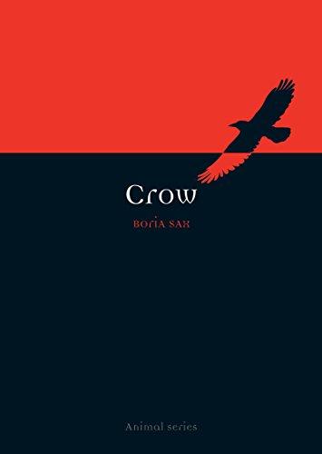 Crow (Animal)