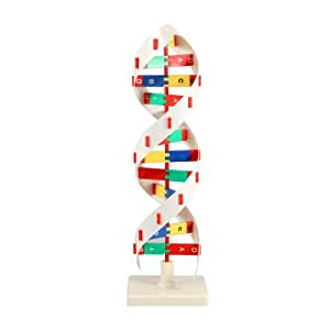 Amazoncom Artech Dna Model B 8983 Japan Import Office Products