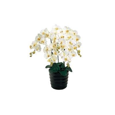 人工観葉植物 ピュアオーキッド5本立(ファレノ)クリームホワイト 光触媒加工 高さ72cm zv6500b (代引き不可) インテリアグリーン 造花 B07SW9T7B5
