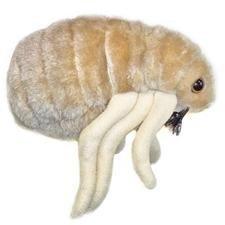 giant-microbes-flea-ctenocephalides-felis