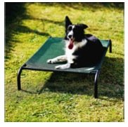 Coolaroo Elevated Pet Bed with Breathable Fabric, Medium 42