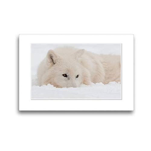 CALVENDO Toile Textile de qualité supérieure de 45 cm x 30 cm, Un Motif de Moments émotionnels : Polarwölfe/CH, Version Murale, Image sur châssis Toile imprimée Animaux Animaux