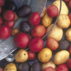 seed potatoes mix - 1