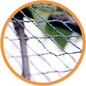 Nutley's Green Woven Garden Bird Netting: 10m x 2m*