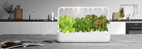 Emsa 3 Cápsulas Rúcula Click & Grow, Semillas apta para Smart ...
