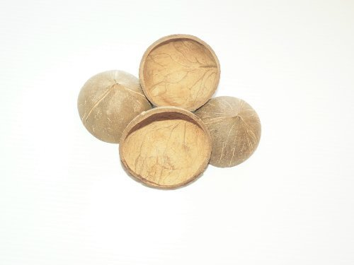 Shell Coconut Half (4 Round All Natural 1/2 Shell Coconuts Bird Parrot Toy Uncolored)