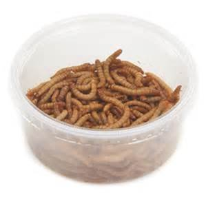 500ct Live Mealworms , chicken, reptile, birds, and fish food.