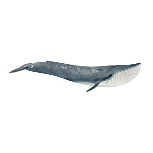 SCHLEICH Wild Life Blue Whale Educational Figurine for Kids Ages 3-8