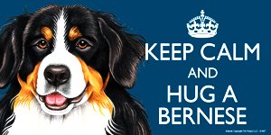 Bernese Mountain Dog Gift - 'KEEP CALM' LARGE colourful 4' x 8' MAGNET - High Quality flexible magnet for indoor or outdoor use for your Fridge, Car, Caravan or use on any flat metal surface -Water proof and UV resistant.