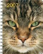 Katzen 2007
