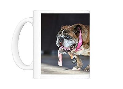Mug of World s Ugliest Dog Competition (15392848)