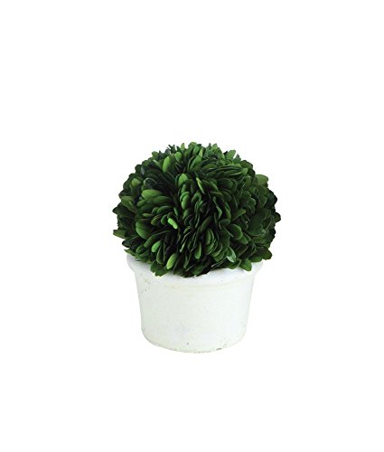 First of a Kind 4'' Round x 5'' H Preserved Boxwood Topiary, Half Ball in White Clay Pot by First of a Kind