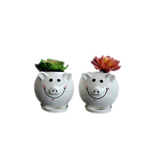 Pig Pot - 7