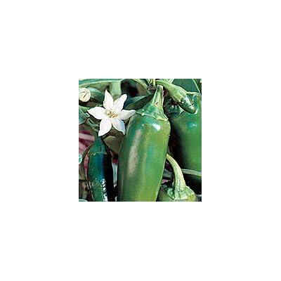 Seeds of Change Certified Organic Jalapeno Pepper: Garden & Outdoor