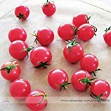 Visa Store 2018 Hot Sale Sweet Treats Hybrid Pink Cherry Tomato Seeds, Professional Pack, 100 Seeds/Pack, Clusters of Tomato #NF726 ()