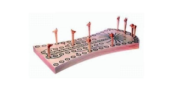Perros y chacales sbhm juego de faraón-juegos de mesa: Amazon.es: Hogar