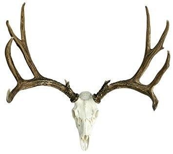 Faux Life Size European Mule Deer Antlers by Muskoka Lifestyle Products MUS202