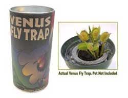 grow your own venus fly trap instructions