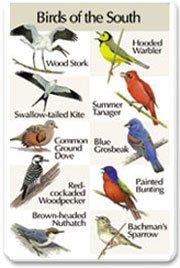 Identiflyer SongCard - Birds of the ()