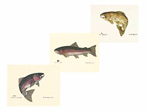 Fly Fishing Trout Prints - wallsthatspeak 3 Fish Prints Steelhead Brown Rainbow Trout Poster Fishing Art Picture 8x10 Inches
