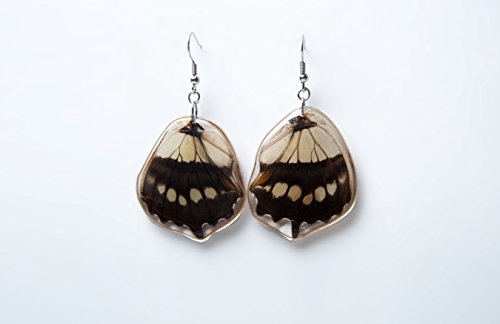 Real Butterfly earrings Siproeta steleness lower wing butterfly silver 925 earrings (Fiberglass Wings)