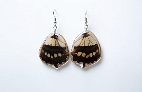 Real Butterfly earrings Siproeta steleness lower wing butterfly silver 925 earrings
