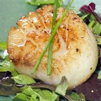 Today Gourmet - Scallops - U10 Dry (5lb Pkg) by Today Gourmet