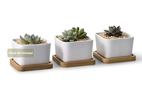 Opps 354 Inch White Ceramic Contemporary Square Design Succulent Plant Pot/Cactus Plant Pot with Bamboo Tray  Pack of 3