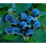 Faeries Finest Flavor Extract, Blueberry, 16 Ounce