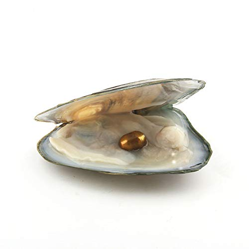 Calvas Natural Pearl Freshwater Cultured Pearl Oyster with 7-8 mm Oval 14 Color Pearl DIY Birthday Gifts Vacuum-Packed - (Color: Champagne)