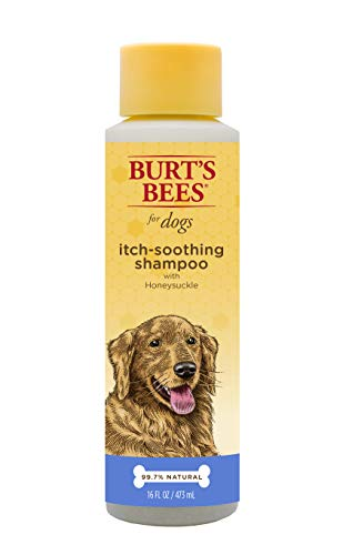 Burt's Bees For Dogs Natural Itch Soothing Shampoo with Honeysuckle | Anti-Itch Dog Shampoo, 16 Ounces