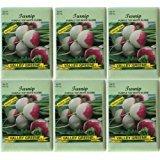 Valley Greene (6 Pack) Heirloom Variety Purple
