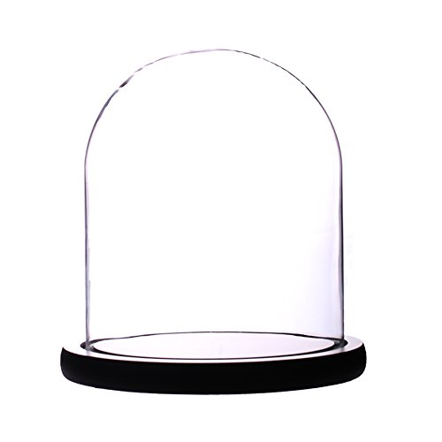 Artlass Glass Cloche Bell Jar Display Dome with Black Wooden Base 6