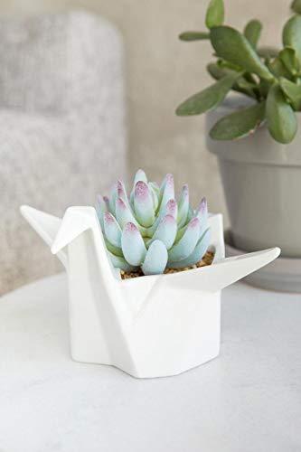 - Francescas Swan Origami Succulent