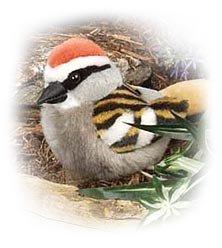 Chipping Sparrow - Audubon Plush Bird (Authentic Bird -